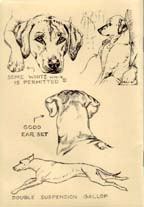 Illustrated Breed Standard - Right