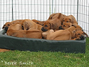A Pile of Puppies!